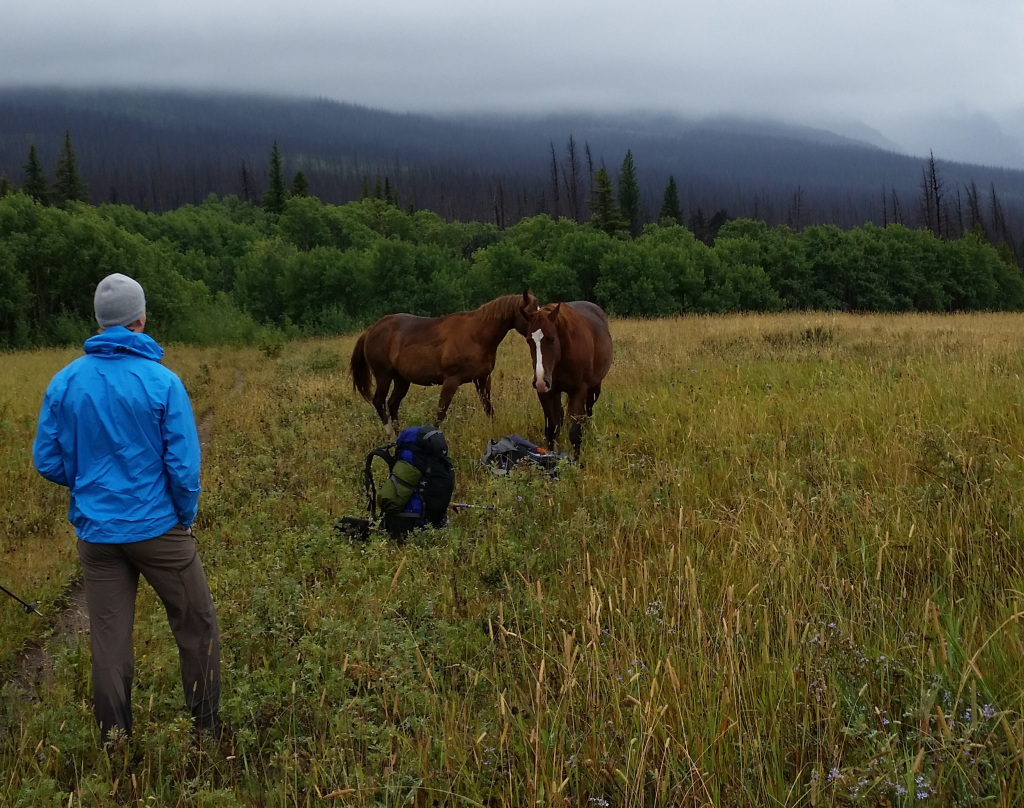 Wild horse harassing the backpackers.