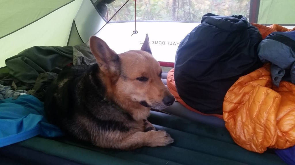 Dog Relaxing in the tent